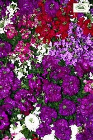profumo dei fiori il profumo dei fiori