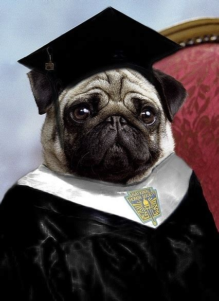 useless web pug the 21 most useless college majors for pugs from fashion design to boat operating