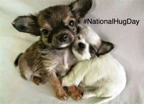 hugging dogs national hug day animal hugging pictures veterinary secrets with dr andrew