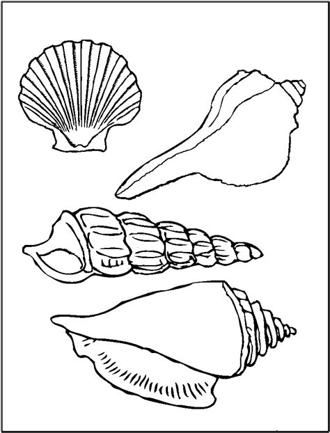 shell coloring pages free printable seashell coloring pages for