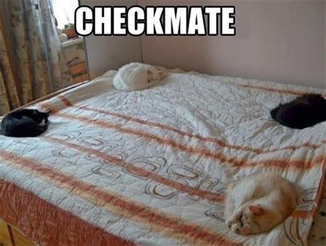 funny beds cats on the bed funny pictures dump a day