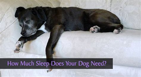 how much sleep do puppies need how much sleep does your need chasing tales