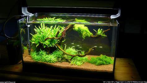 Aquarium L With Fish by Fish Tank Decorations 60l On Lava Rock 60l Biorb