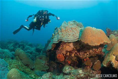 Flower Garden Reef Scuba Diving Flower Garden Banks Scuba Diving