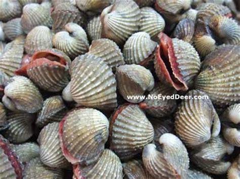 seafood restaurants types of mollucs clam shellfish