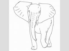 Amazing Elephant Coloring Pages Easy Tribal Animal Drawings