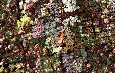 Succulent wall garden the lovely plants