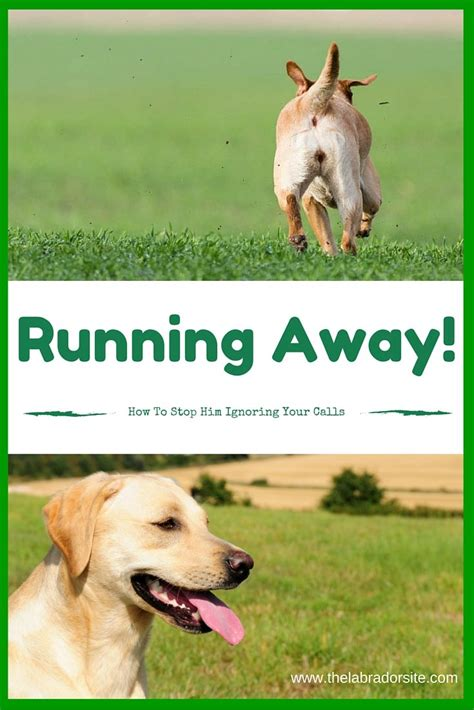 how to a to stop running away dogs running away how to stop them