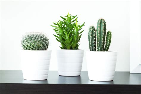mini plants ikea white potted cacti google search style stack dorm life pinterest minis bookcases