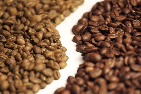 Coffee Robusta whats the difference between arabica and robusta coffee beans on tribal coffee organic and