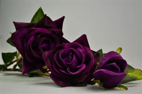 gambar bunga mawar indah    menghipnotismu