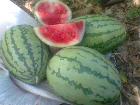 pengertian  definisi buah  tumbuhan dunia tumbuhan