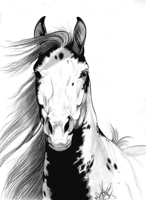 mustang horse drawing wild mustang horse drawing