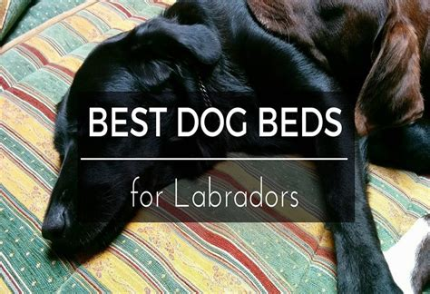 best dog bed for labs top 6 reviews of 2017 how to choose the best dog beds for