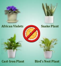 houseplants that don t need sunlight dress up your home with these indoor plants that don t