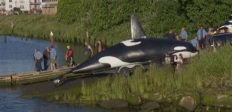robot killer whale orca used to scare sea lions in oregon town flops