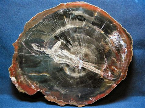 Fossil 107 Blue lab one fossils and preservation geology 107 with