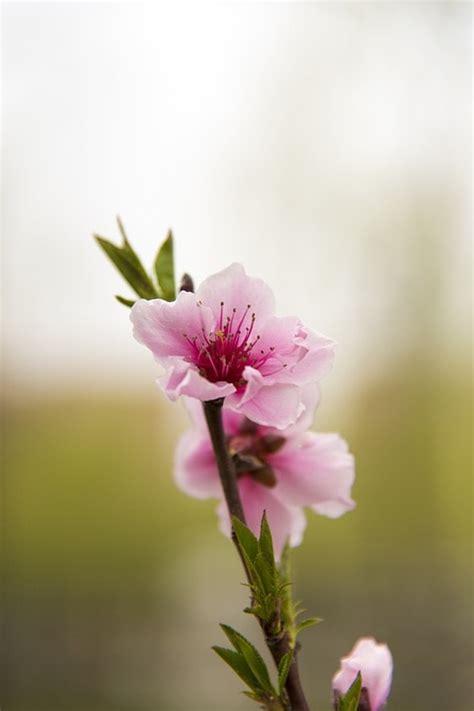 giardino sempre fiorito alberi da giardino vuoi avere un giardino sempre fiorito