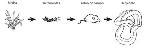 cadenas alimentarias ejemplos para niños pagina para colorear de la cadena alimentaria