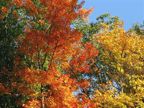 journey north signs   seasons phenology