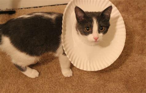 cone collar paper plate cat cone collar petdiys
