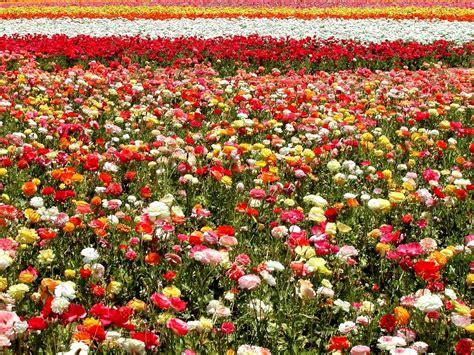 imagenes a flores flores multioeste lda