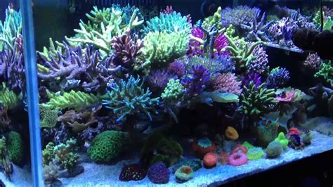 Japanese Aquascape reef sps tank youtube