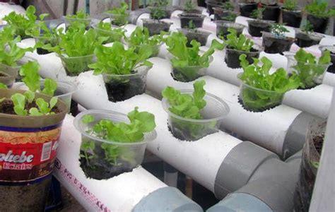 Hidroponik Fertigasi Sederhana farming menanam menggunakan sistem hidroponik