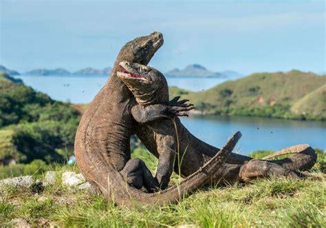 keren pulau komodo jadi lokasi syuting film thailand