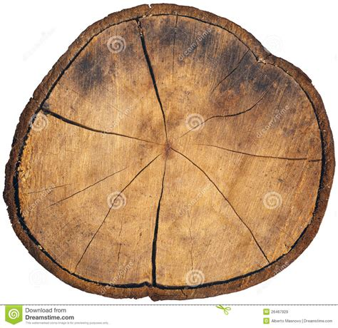 Cutting A Tree In Sections by Section Of Tree Trunk Isolated Royalty Free Stock Images Image 26467929