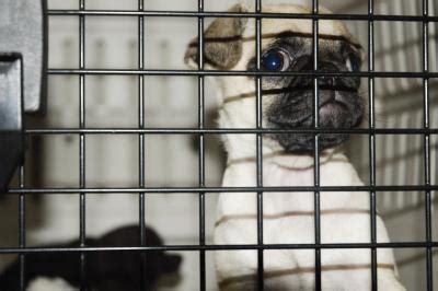 barking in crate how to keep a from whimpering barking in his crate care the daily puppy