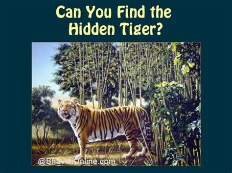 How To See How Many Search Something On Picture Riddle Find The Tiger