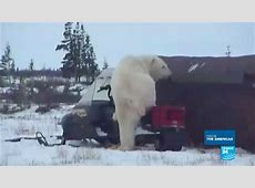 Canada: Welcome to Churchill, the polar bear territory ... France News 24 Live