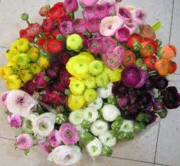 ranunculus flowers la fleur vintage your flowers