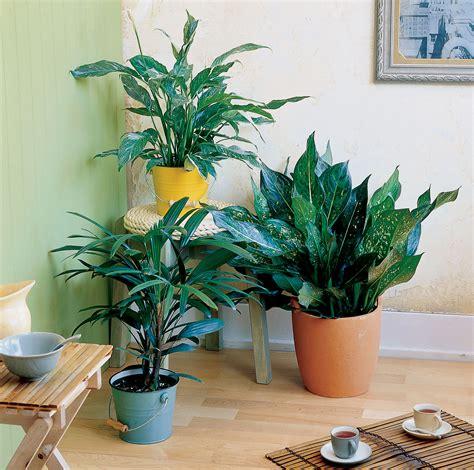 easy care indoor plants sunset magazine