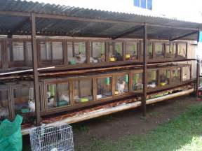 Cages For Rabbits Hero Pet Mart My New Rabbit Cage