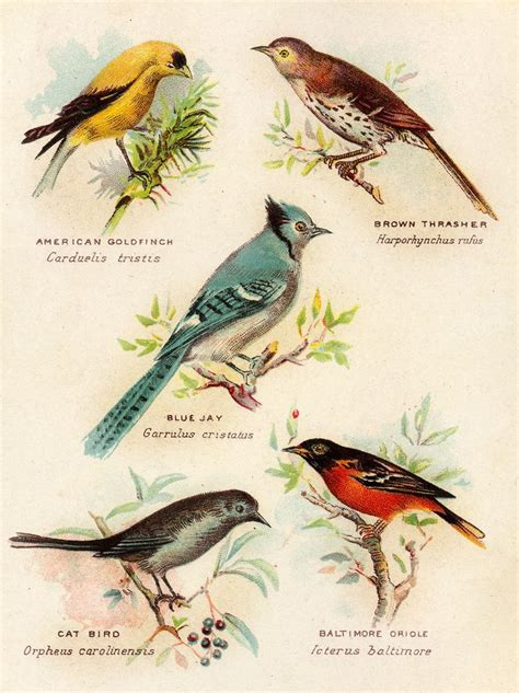 Tissue Decoupage Eropa 18 574 best images about birds to on nests