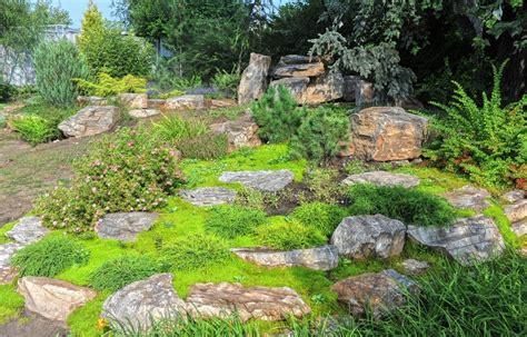 maintenance lawn alternatives