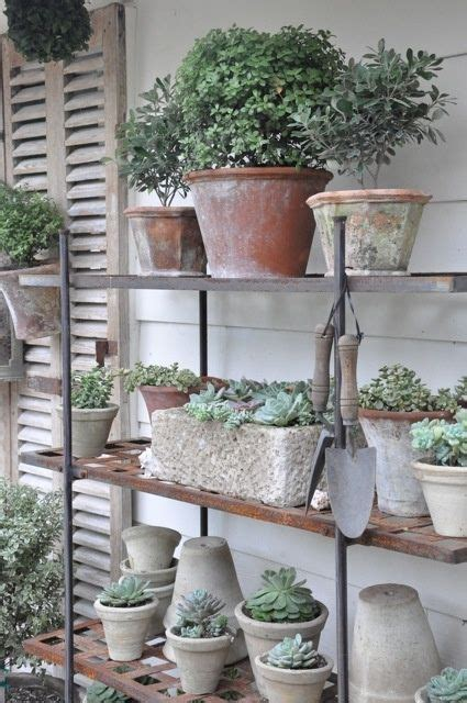 diy succulent projects top 12 succulent diy projects