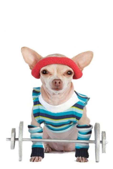 how to exercise a puppy ask the trainer easy ways to exercise your sacramento press
