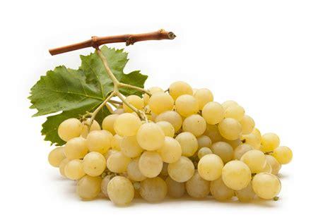 uva da tavola italia festival internazionale uva da tavola igp a mazzarrone