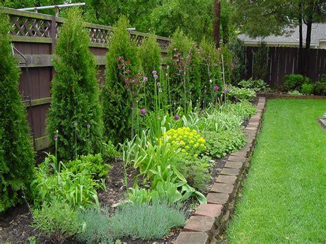 image showing arborvitae planted along fence line fences