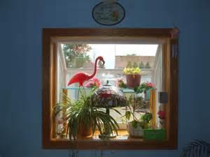 Plant Window How To Grow Plants In A Plant Window
