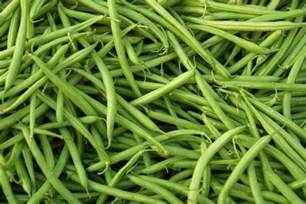 beans planting growing and harvesting bean plants the