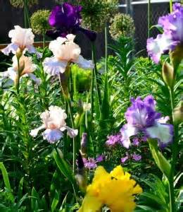 how to keep your iris blooms from tipping over buffalo niagaragardening com