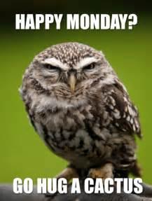 Owl Meme - owl memes tumblr