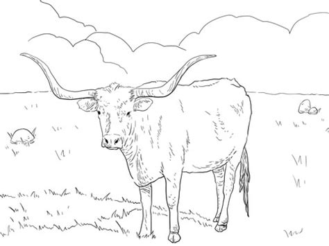 highland cow coloring page highland cow coloring page coloring pages for free