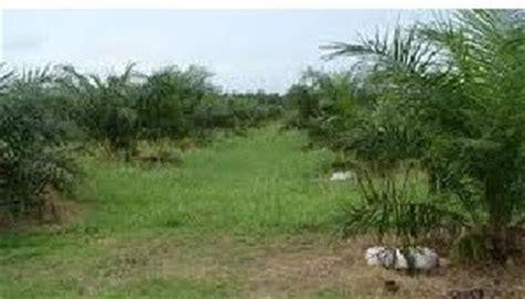 Benih Rumput Gajah Di Malaysia anim agro technology jenis rumpai di ladang sawit