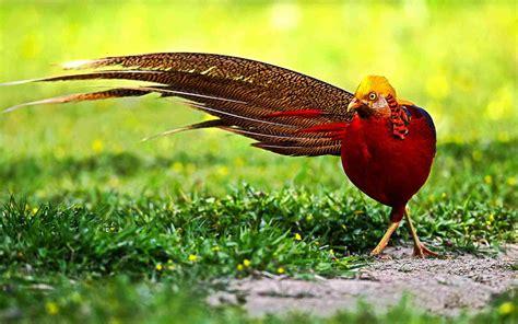 Golden Bird the world s most beautiful birds photosdaily