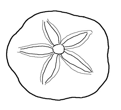 sand dollar printable template jos gandos coloring pages